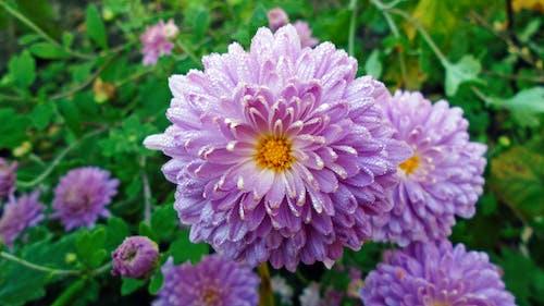Безкоштовне стокове фото на тему «зелений, квіти, рожевий»
