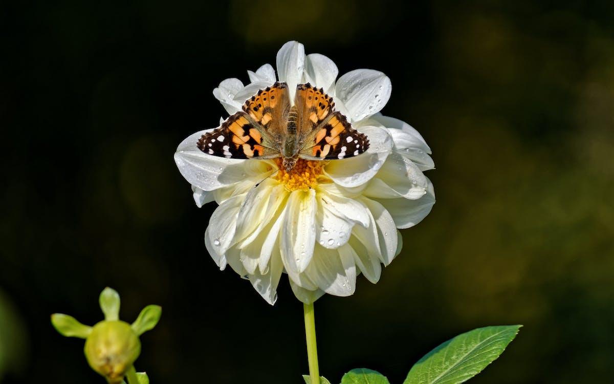 бабочка, белый цветок, дикий