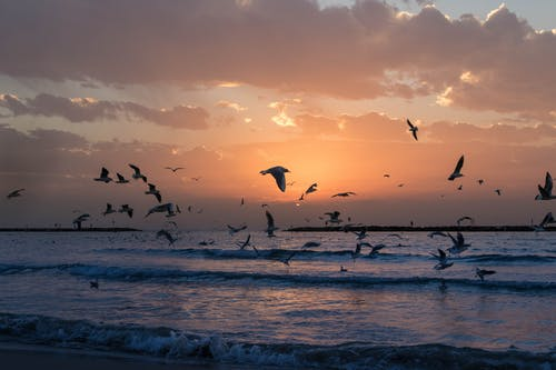 Ilmainen kuvapankkikuva tunnisteilla aallot, aamu, aamunkoitto, auringonlasku