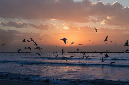 Fotobanka sbezplatnými fotkami na tému čajky, Izrael, krajina pri mori, kývať