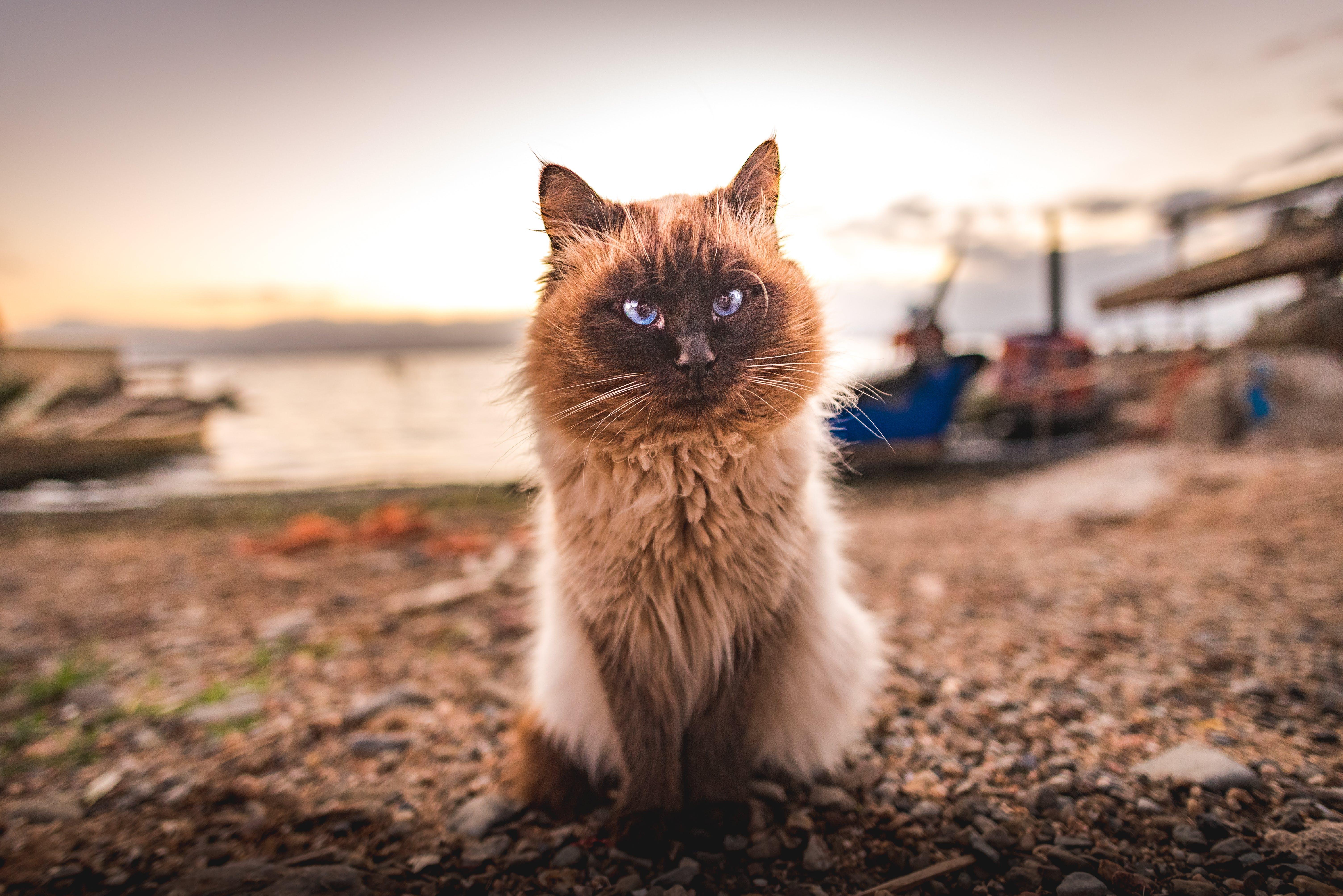 Kostnadsfri bild av cagliari, däggdjur, djur, förtjusande