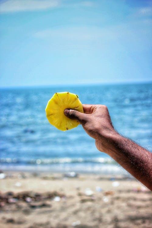 假期, 切片, 宏觀, 岸邊 的 免费素材照片