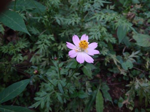 Free stock photo of beautiful flowers, purple, purple flower