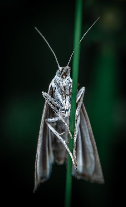 マクロ, 昆虫, 蛾の無料の写真素材