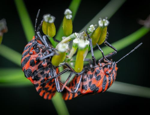 バグ, マクロ, 昆虫の無料の写真素材