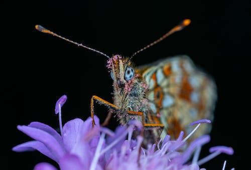 バタフライ, マクロ, 昆虫の無料の写真素材