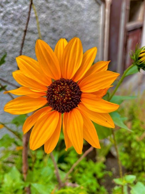 Free stock photo of aesthetic, explore, flower bearing plants