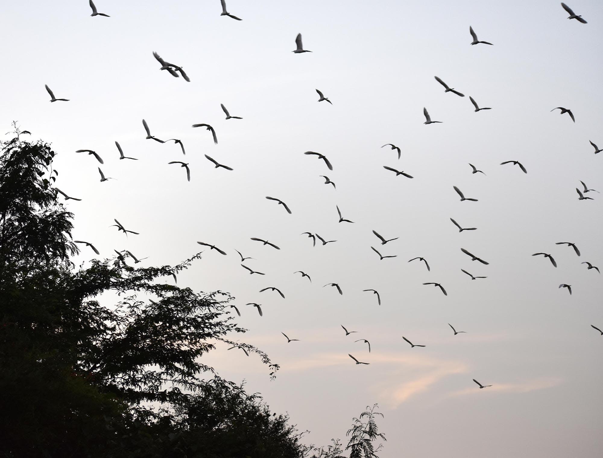 Kostenloses Stock Foto zu paradiesvögel