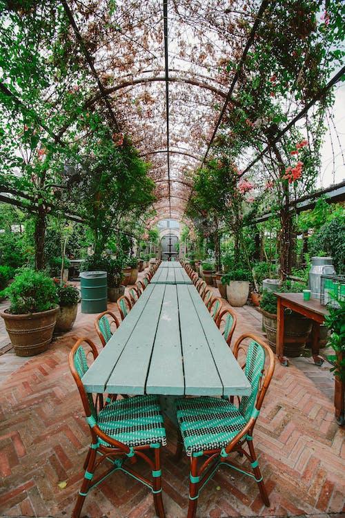 공원, 꽃, 식물군, 식사 공간의 무료 스톡 사진