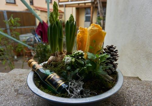 คลังภาพถ่ายฟรี ของ ดอกไม้, สปาร์กลิงไวน์