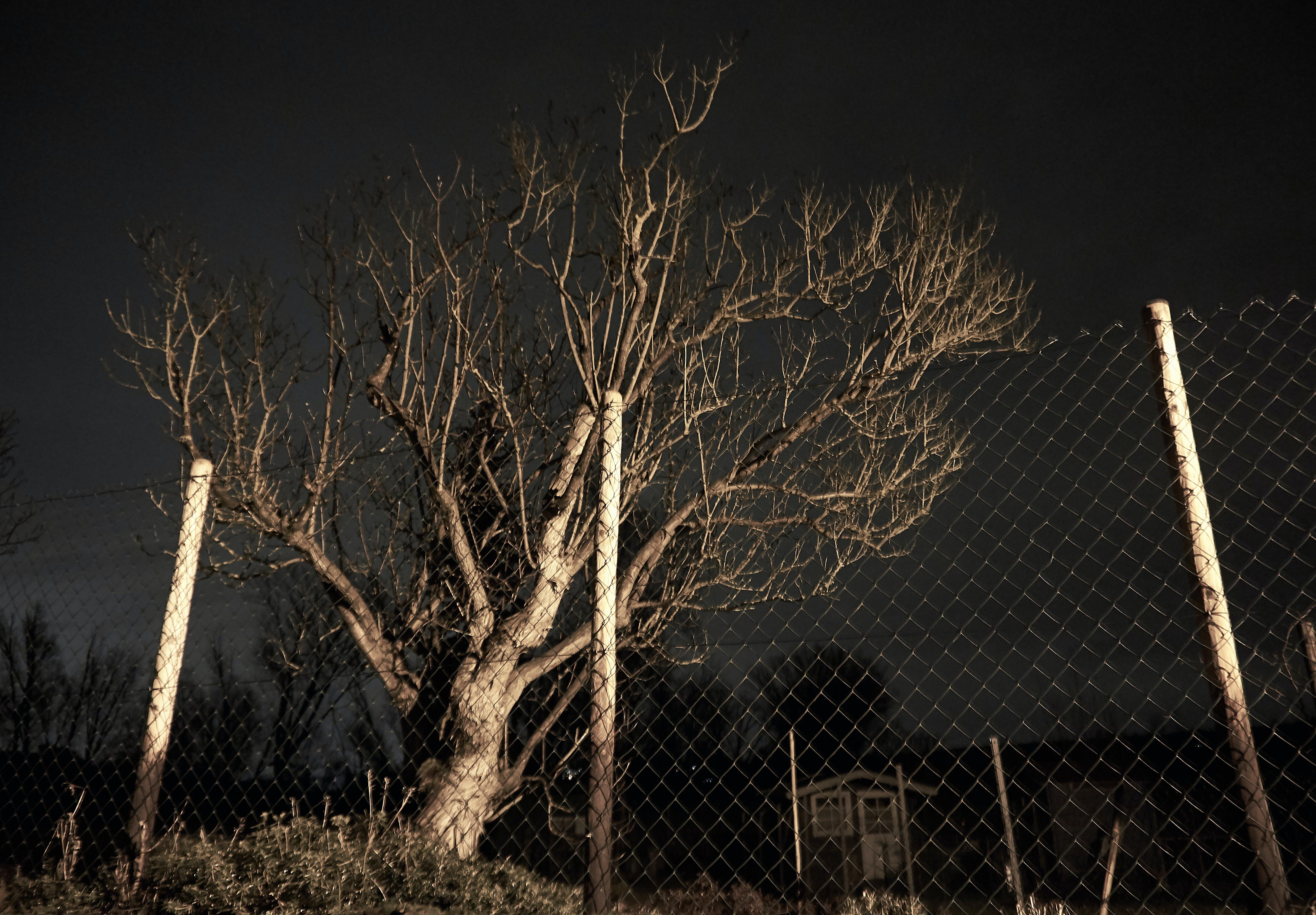 Free stock photo of exposure, night, tree, wood fence