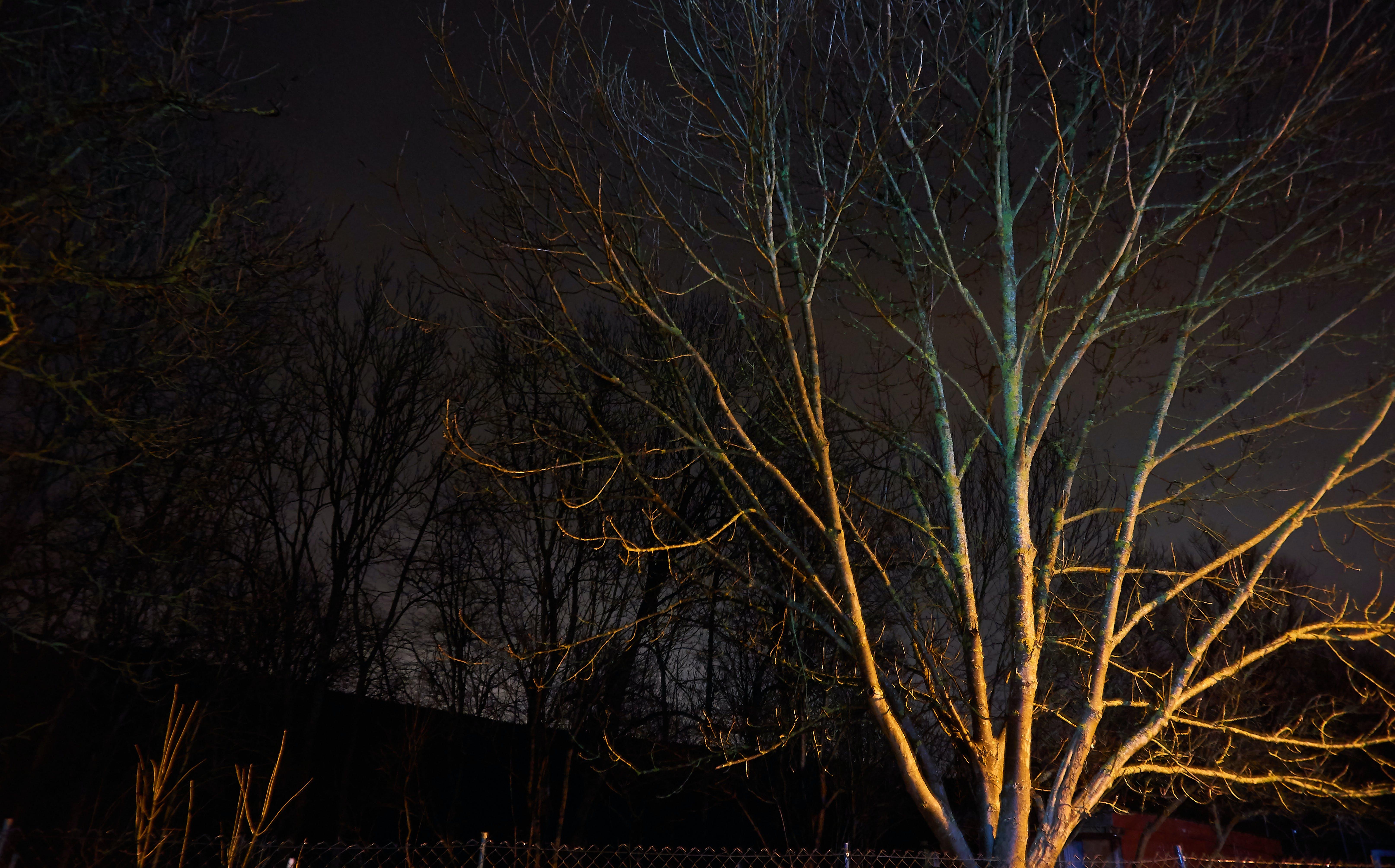Free stock photo of background, nightscape, tree