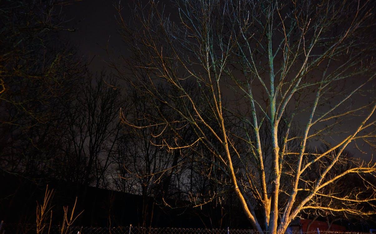achtergrond, boom, nachtlandschap