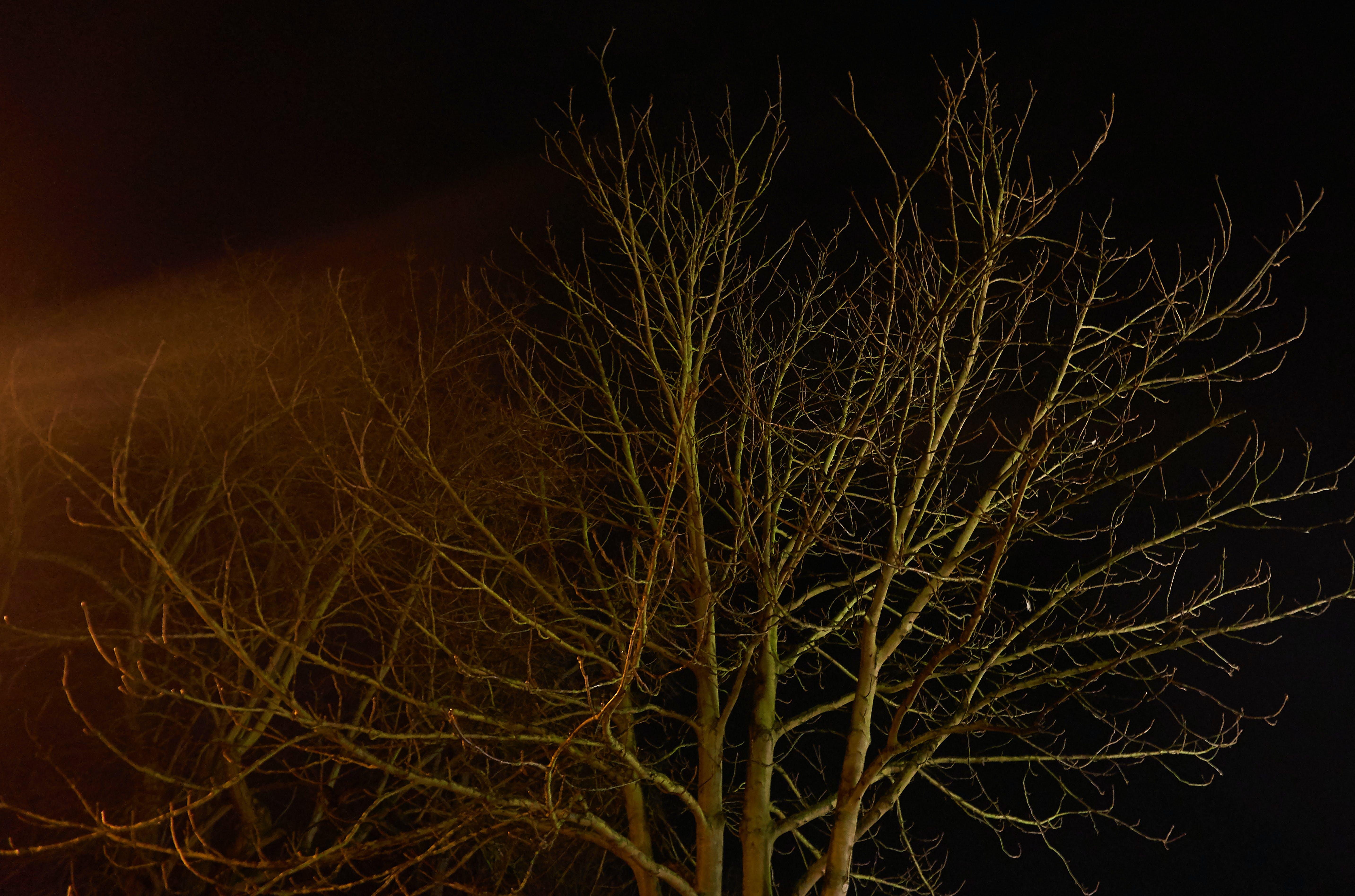 Free stock photo of exposure, night-sky, tree, winter