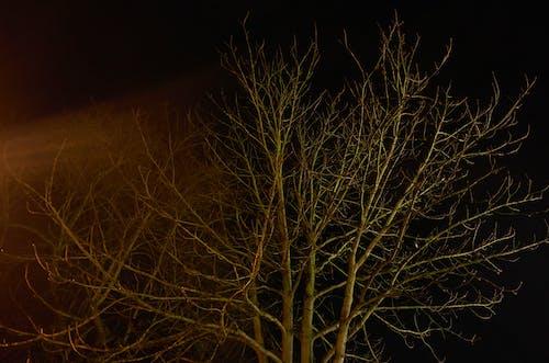 Kostenloses Stock Foto zu baum, belichtung, nachthimmel, winter