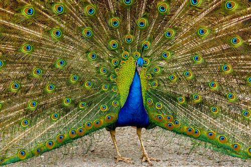Gratis lagerfoto af dans, dyr, dyreliv