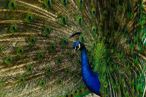 Gratis lagerfoto af dyr, dyreliv, farve