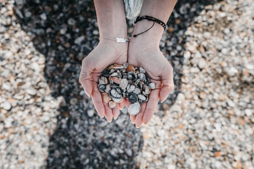 Crop woman with pile of sea shells on shore