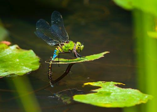 Dragonfly Perched on Green Leaf