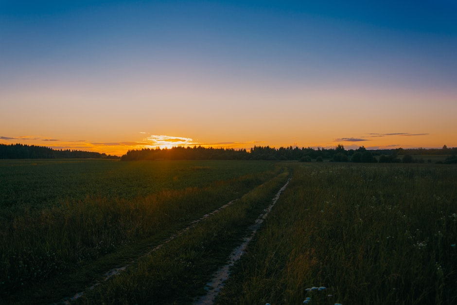 Photo of Green Grass Field during Golden Hours