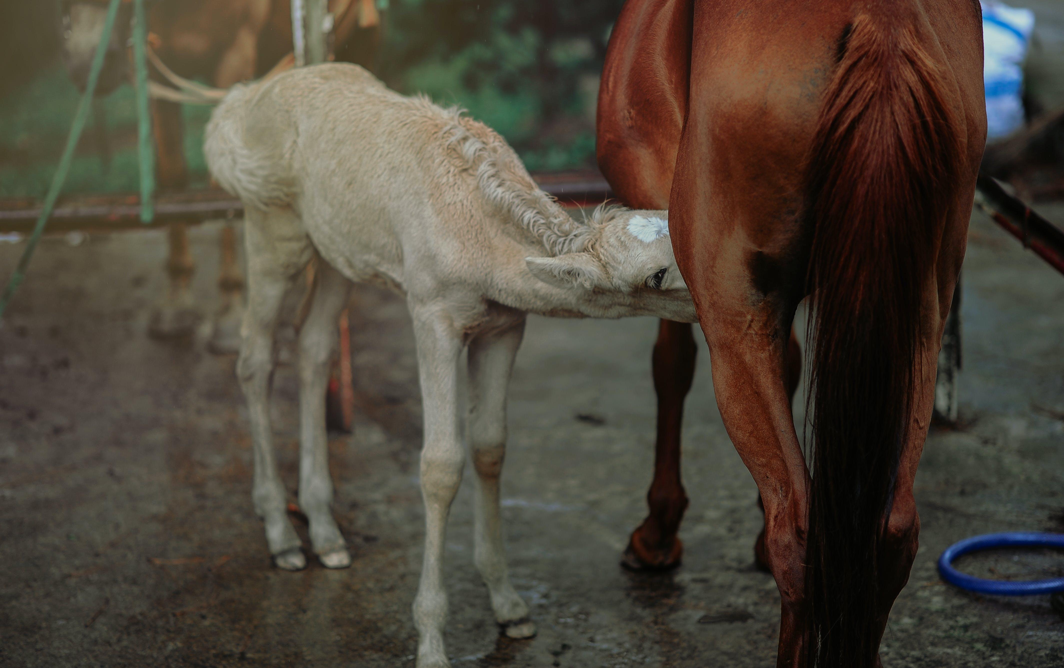 Brown Horse Feeding White Horse