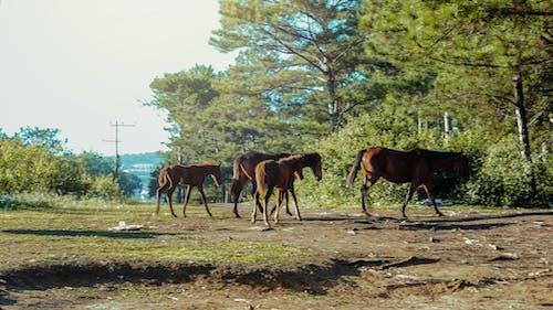 Fotobanka sbezplatnými fotkami na tému cicavce, farma, hospodárske zviera, kobyla