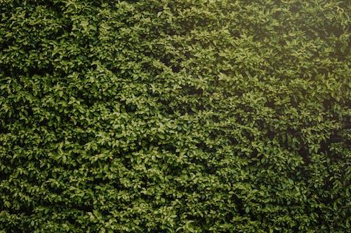 Foto d'estoc gratuïta de bardissa, clos, creixement, estampat