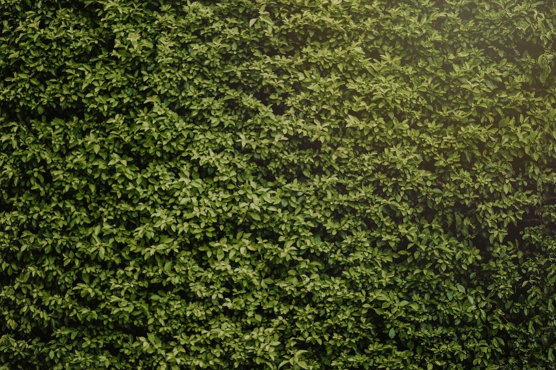 Photo of Hedge