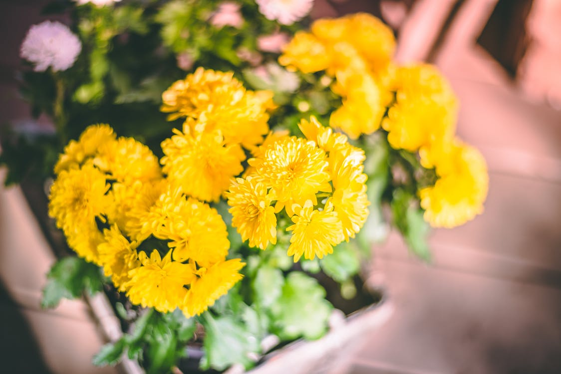 blühen, blumen, blütenblätter
