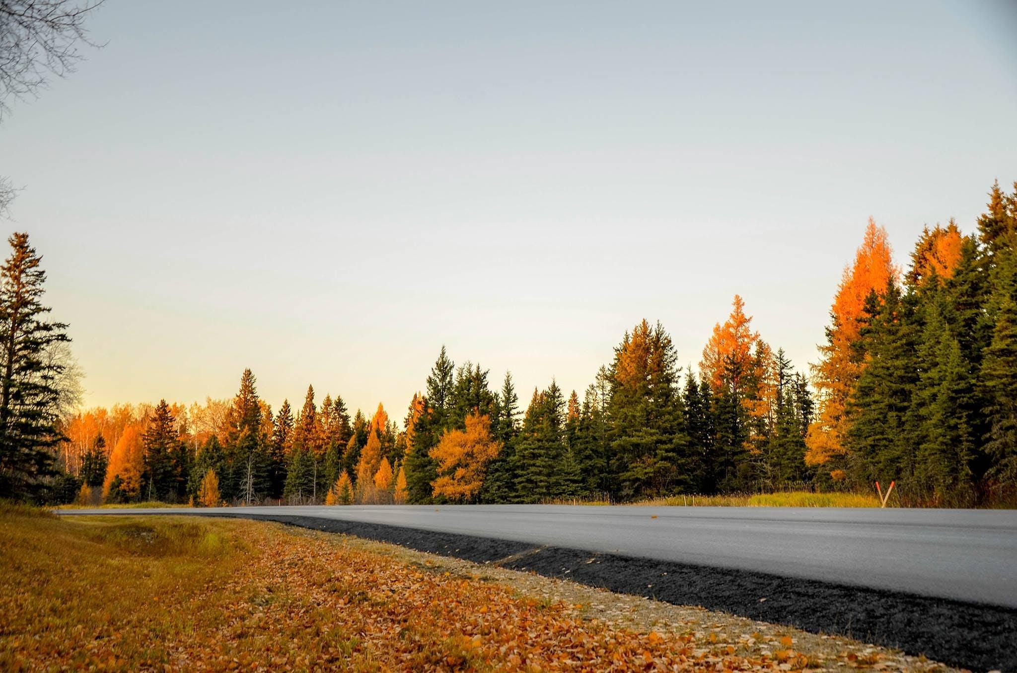 Kostenloses Stock Foto zu bäume, dämmerung, draußen, gras