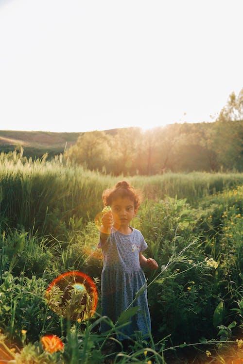 享受, 光, 光線 的 免費圖庫相片