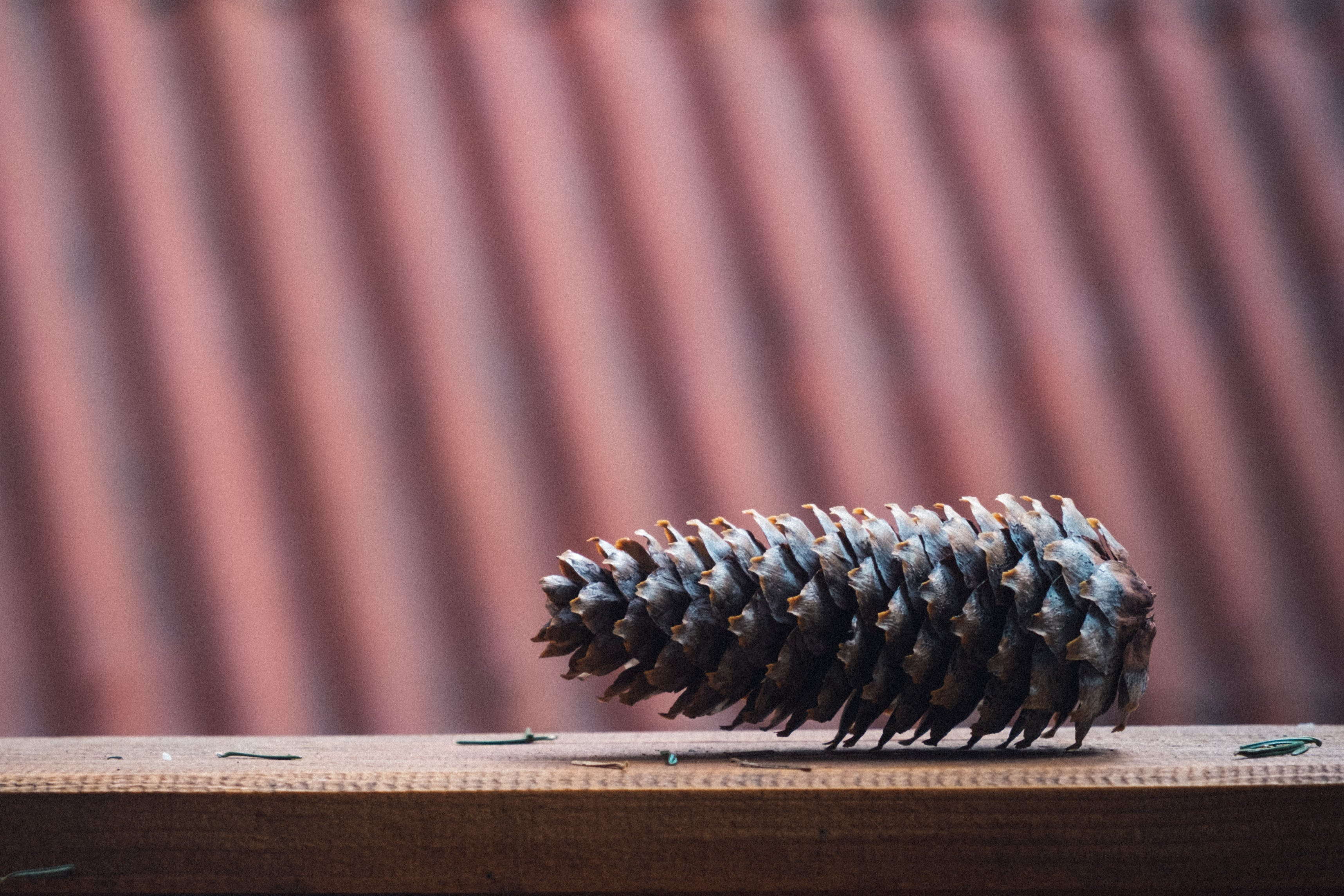 Brown Pinecone on Brown Wooden Surface