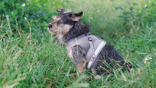 Black and Tan Short Coat Small Dog Lying on Green Grass Field
