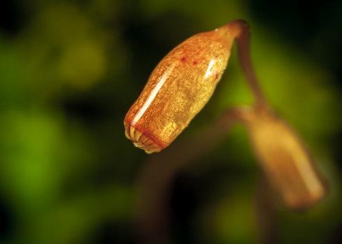Free stock photo of moss, macro, spore box