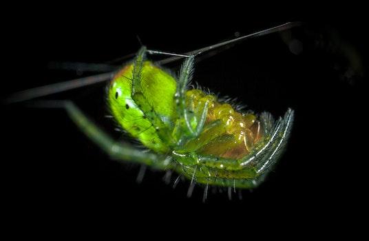 Free stock photo of macro, spider, arachnid