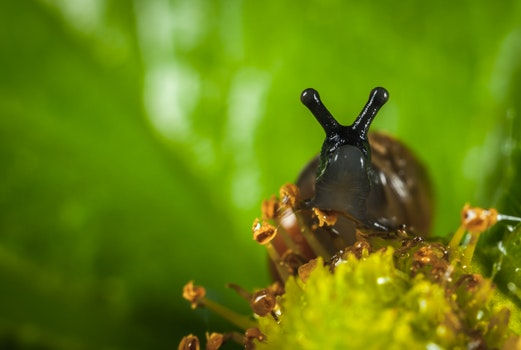 Free stock photo of eyes, snail, macro
