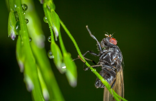 Free stock photo of dew, insect, macro, fly