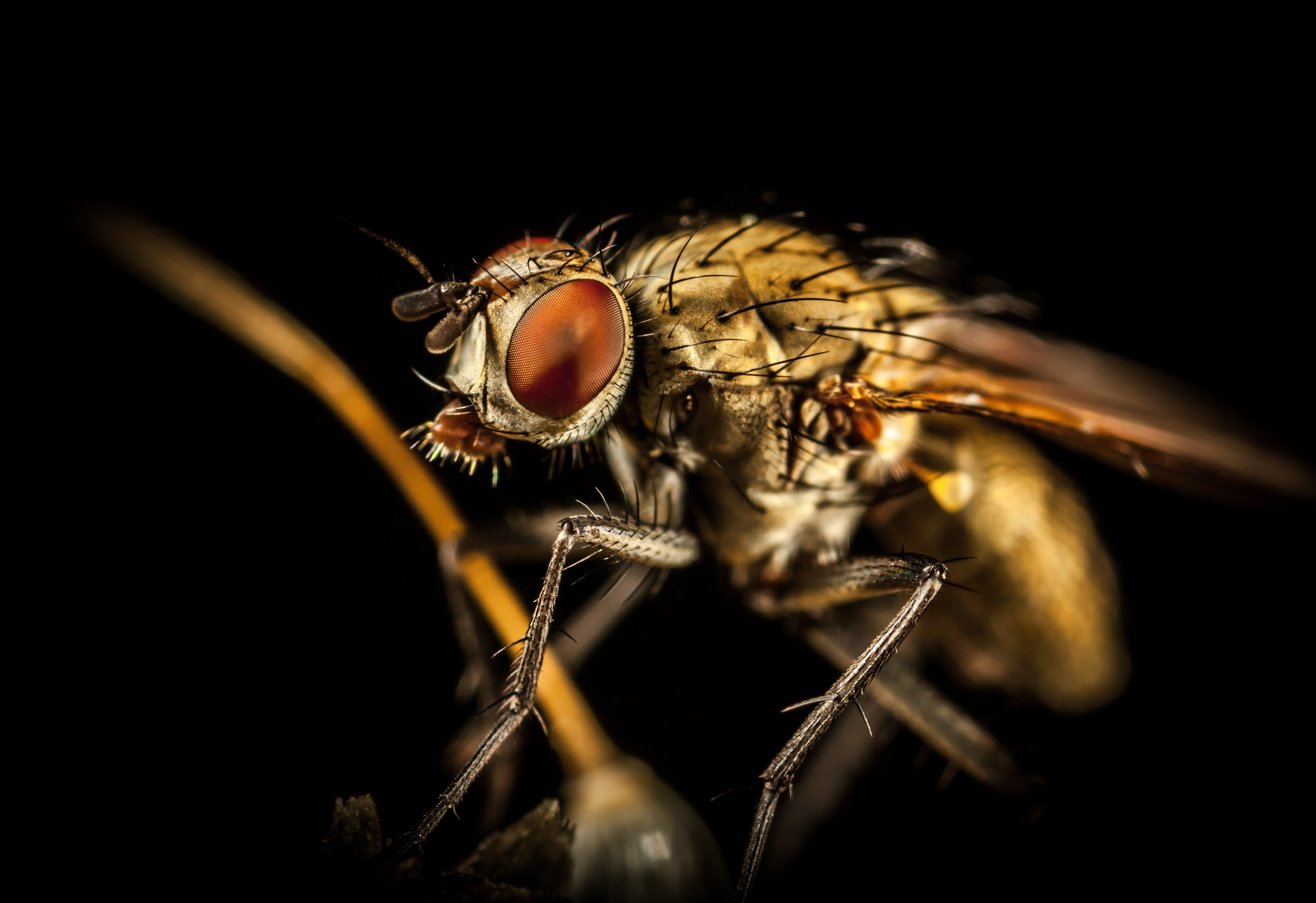 Macro Photography Of Housefly