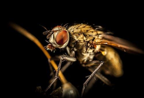 Kostenloses Stock Foto zu behaart, insekt, makro, nahansicht