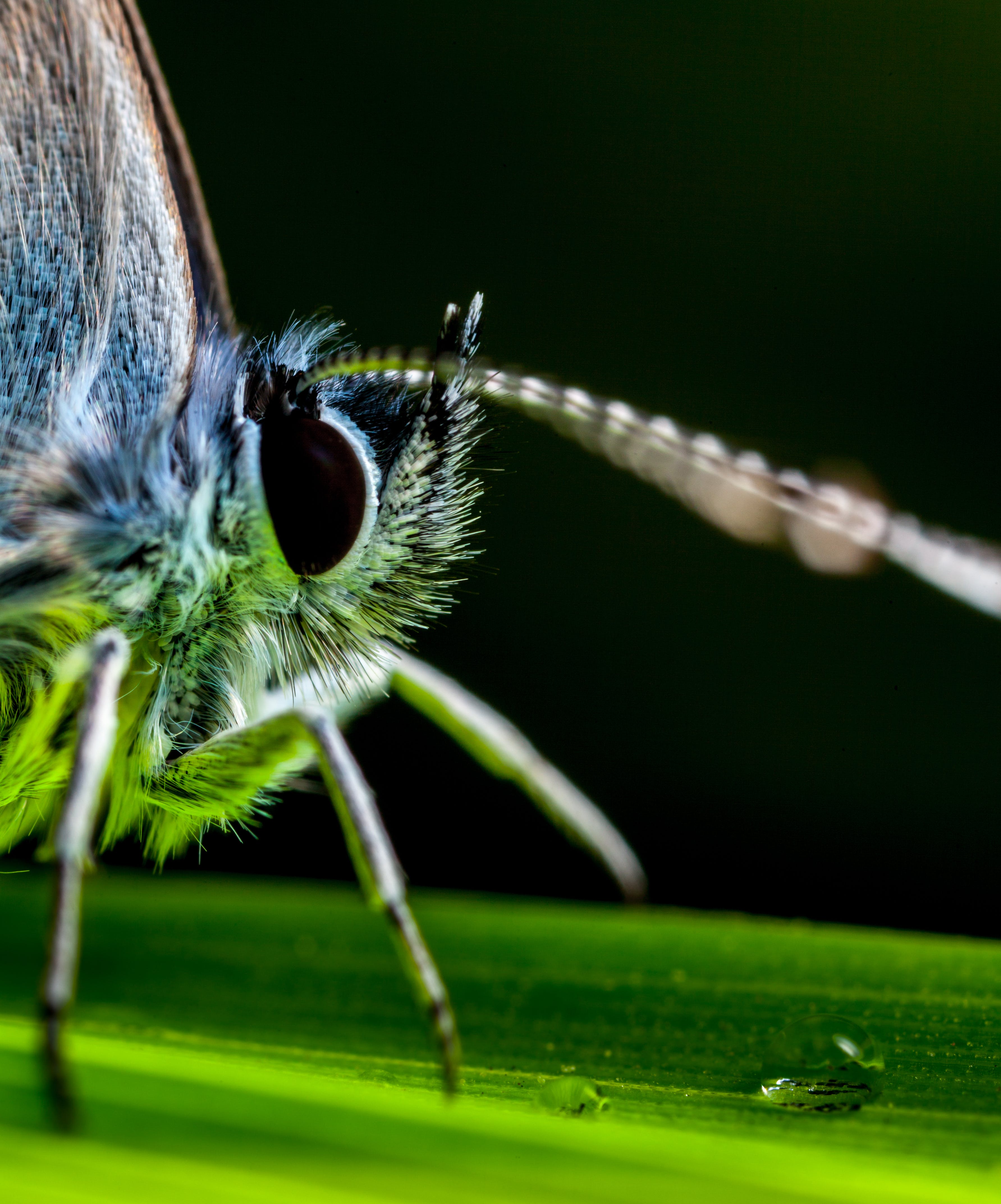 Macro Photography Of Insect Perched On Green Leaf