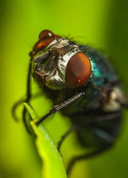 Photography of Fly on Green Leaf
