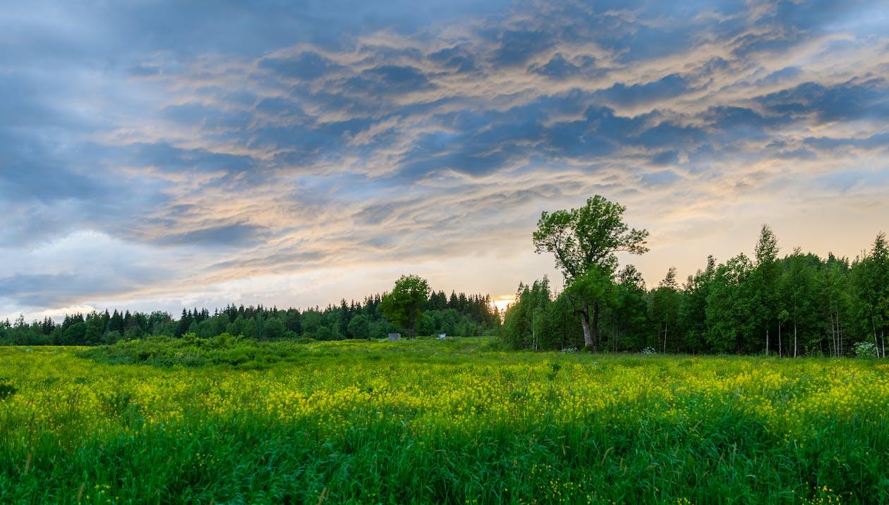 alam, awan, bidang