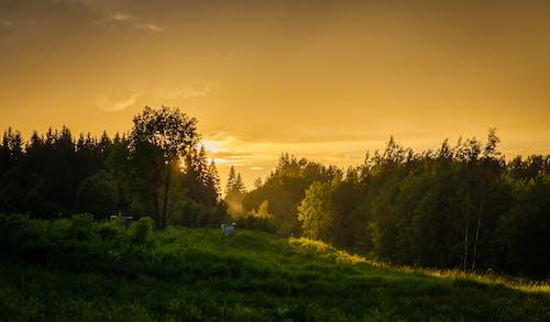 Darmowe zdjęcie z galerii z drzewa, las, malowniczy, natura