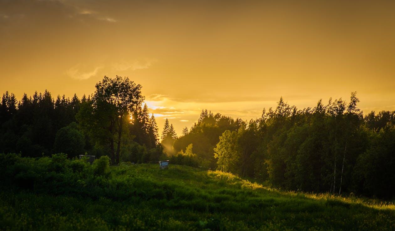 denné svetlo, les, malebný