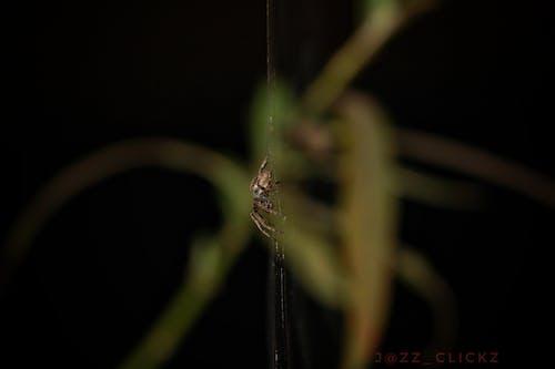 #spider #minimalism #closeup #backdropの無料の写真素材