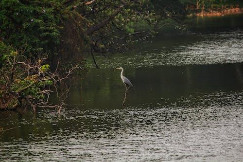 #lone #lake #landscape #birdsの無料の写真素材