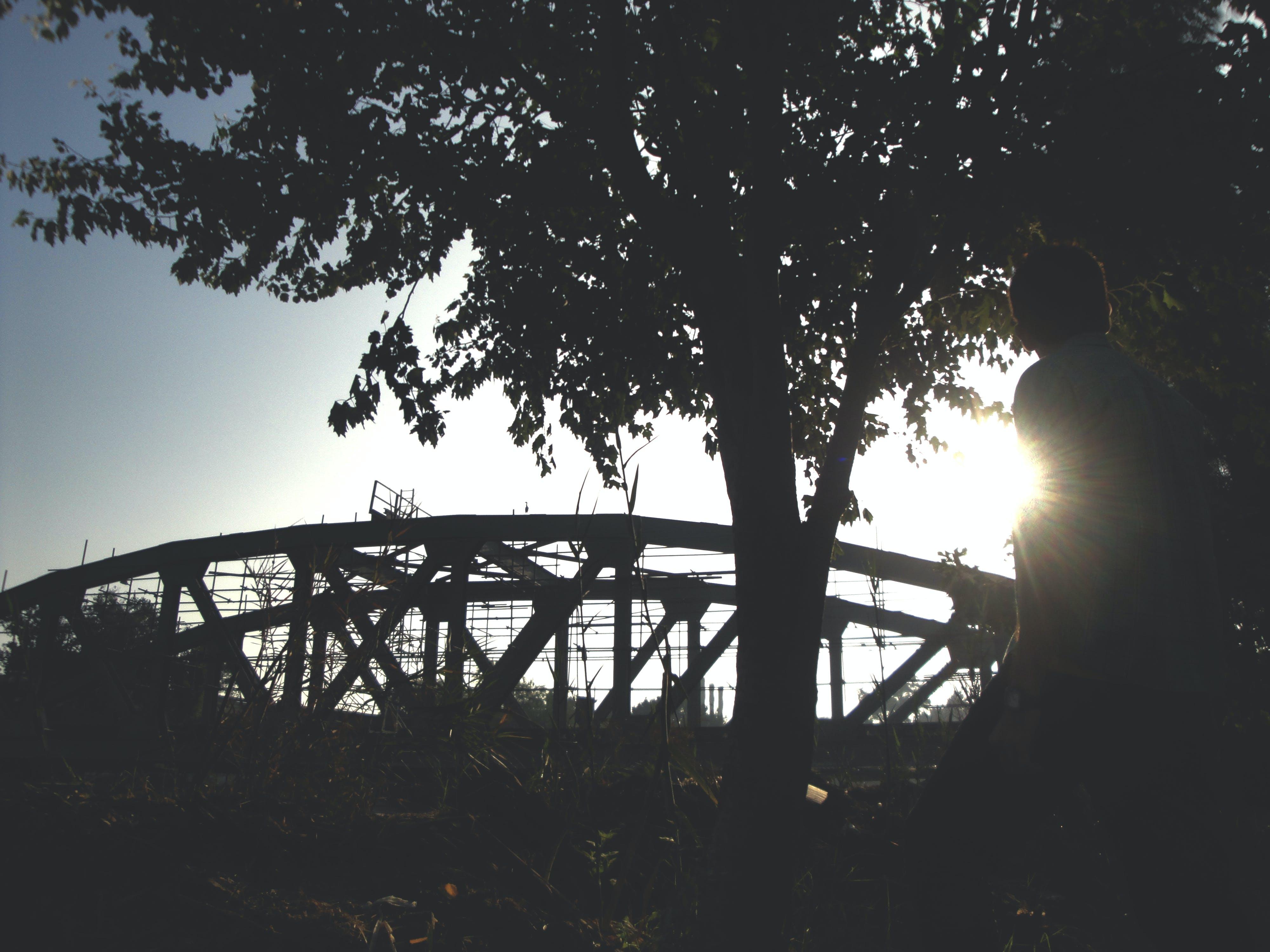 Free stock photo of bridge, egypt, foliage, grass