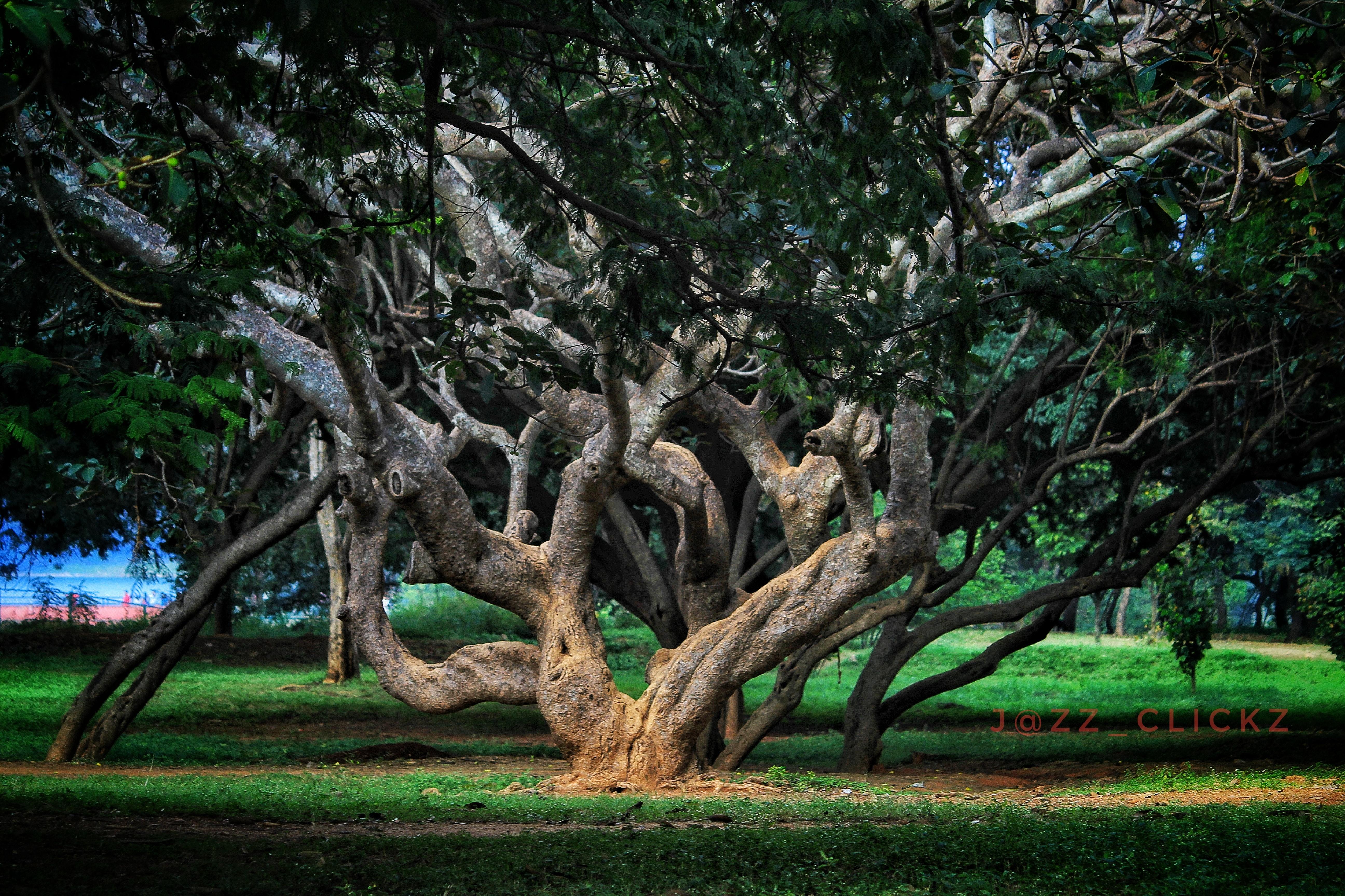 Free stock photo of #trees #lighting #landscape #colourplay
