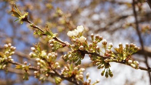 Free stock photo of beautiful flowers, blooming tree, natural spring