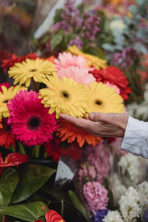 Fotos de stock gratuitas de arreglo floral, colorido, de cerca